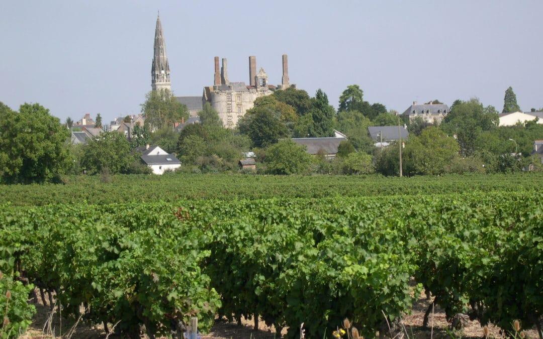 Vigne noble d'Anjou