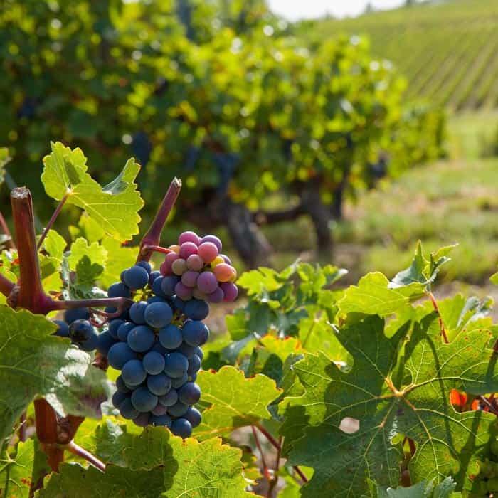 Vignes Anjou Rouge